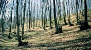 Šuma.