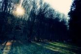 Šuma blizu jezera Petnja.